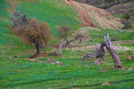 Trees on hills around deserted villages in Tylliria, Cyprus