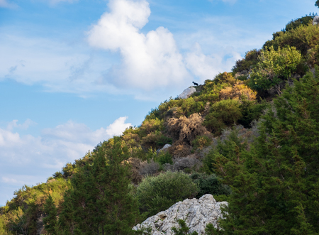 Beautiful view of the forest and the sky with a black goat in the distance as seen from Aphrodite hiking trail in Akamas peninsula, Cyprus