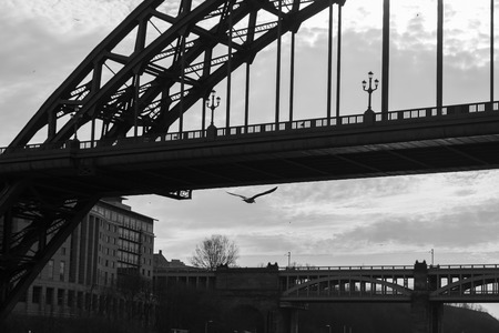 Silhouettes of a section of Tyne and High Level Bridges and a flying Sea Gull in Newcastle upon tyne in the UK