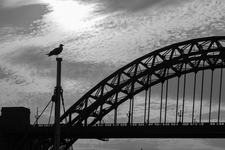 Silhouettes of a Sea Gull sitting on a mast and Tyne Bridge in the distance in Newcastle upon tyne in the UK