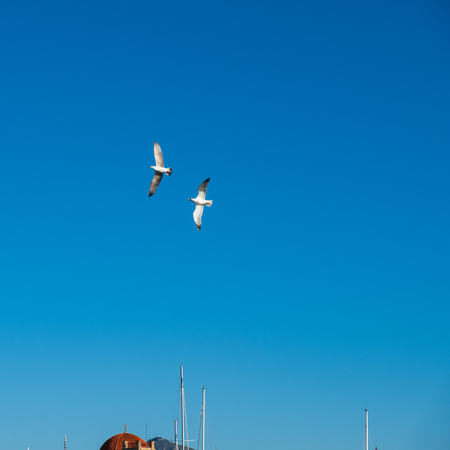 Two sea gulls flying against the blue sky above a church at Aegina Harbour in Greece Stock Photo