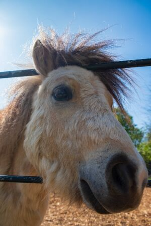 Portrait of a white pony at Heaton Park in north Manchester