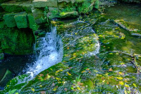 Romantic scene of a water stream with floating fallen leaves in Jesmond Dene park on a summer afternoon in Newcastle-upon-Tyne, UK