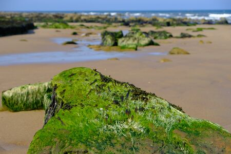 Short Sands beach with sand and rocks with seaweed  off Edward's Bay in Tynemouth, United Kingdom