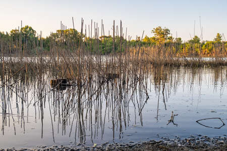 Athalassa Lake in Cyprus with cane and branch water reflections on a beautiful sunny afternoon