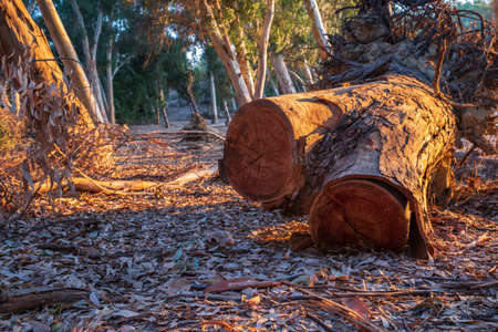 Cut Tree bark at Athalassa Lake in Cyprus bathed in warm afternoon light.