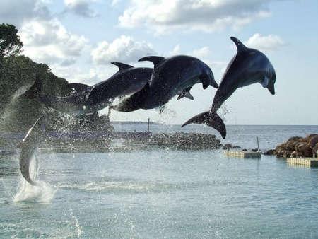 Dolphin Symmetry photo