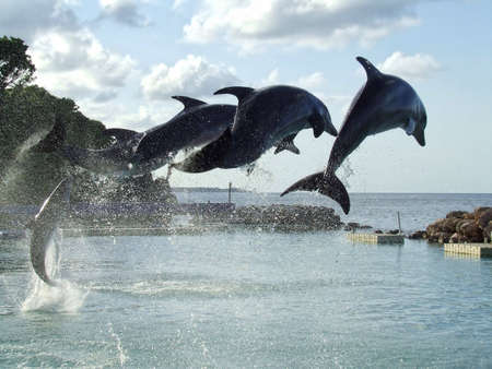 game show: Dolphin Symmetry