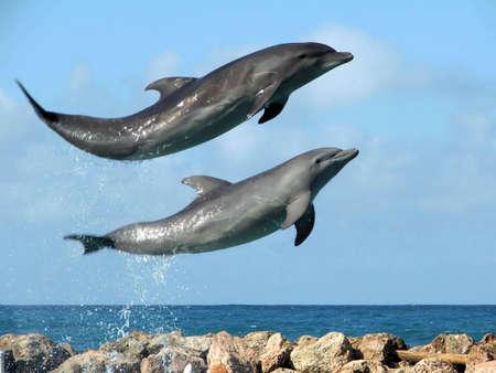 jumping: Riendo de delfines