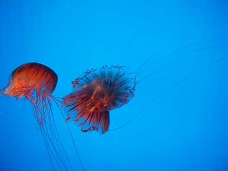 jelly fish: Jelly fish