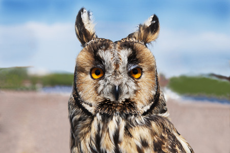 full face: Owl full face close up with yellow eyes with blurred background