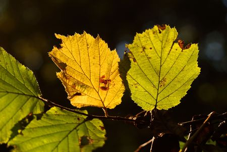 yellowautumn: A bunch of fall leaves