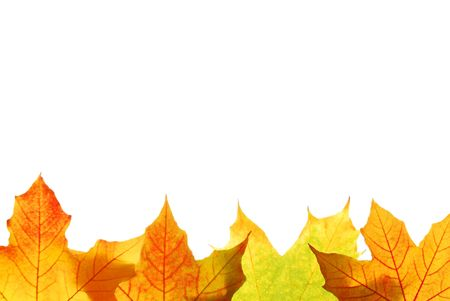 saturate: Autumn maple leaves isolated on white background