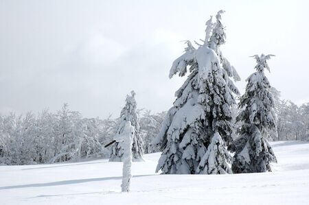 White winter landscape with frostiness trees Stock Photo - 2335922
