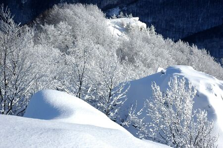 White winter landscape with frostiness trees
