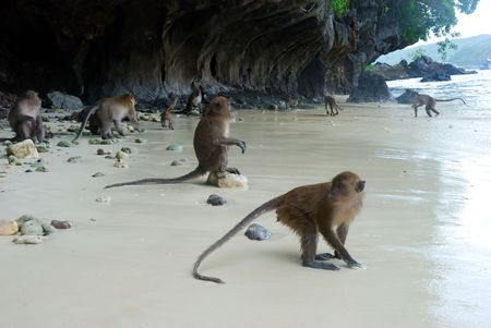 Monkeys on the beach of Phuket island, Thailand Stock Photo - 3595529