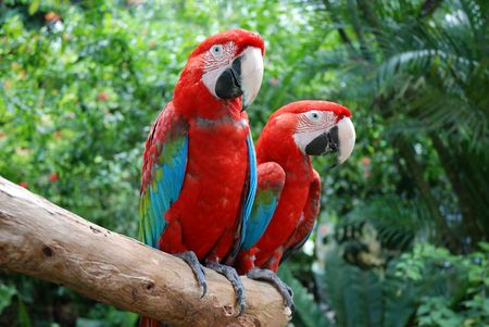 Close-up of a beautiful parrots in Sentosa park, Singapore