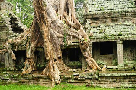 Angkor Wat - Ta Prohm temple, Cambodia  photo