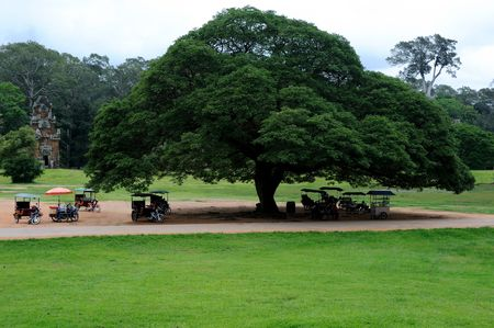 Tuk Tuk under beautiful big tree Stock Photo - 7449771