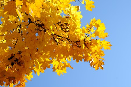 A bunch of fall leaves  Stock Photo