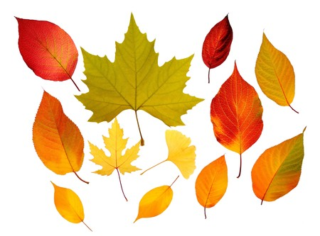 A bunch of fall leaves isolated on white background