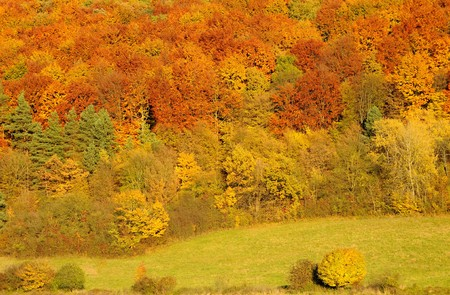 A lot of of trees with colorful leaves in Autumn photo