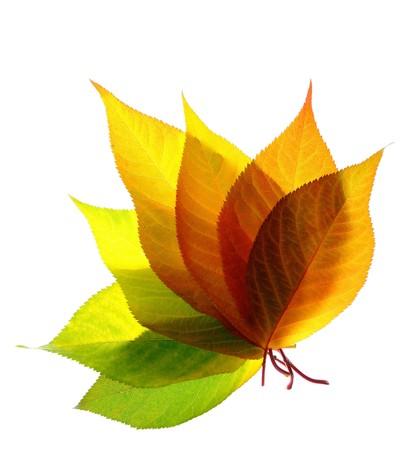 Un montón de hojas de otoño aislados sobre fondo blanco