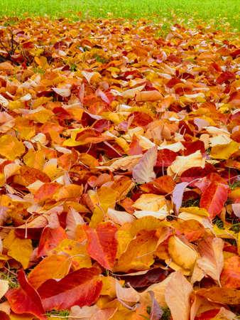 Autumn fall leaves background Stok Fotoğraf