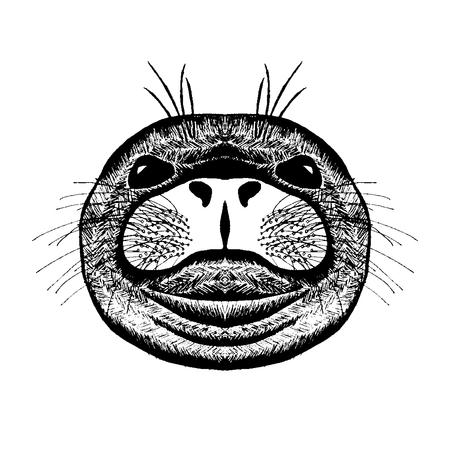 tatoo: stylized seal. Animals.