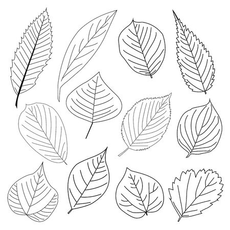 philodendron: Set of leaf line icon