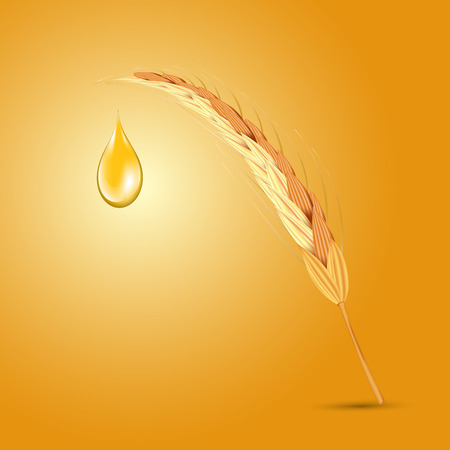 Wheat ear with oil drop.