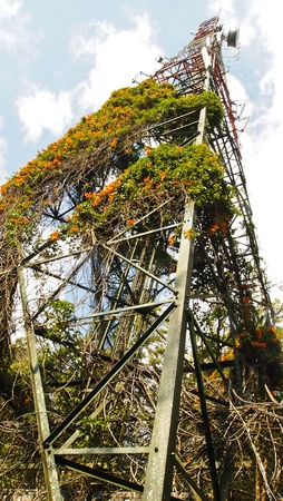 radio tower full of plant