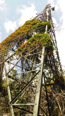 radio tower full of plant