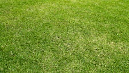 Short green grass floor Stock Photo