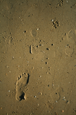 footprint beach