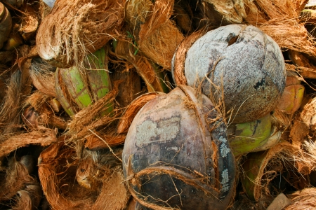 coconut husk Stock Photo