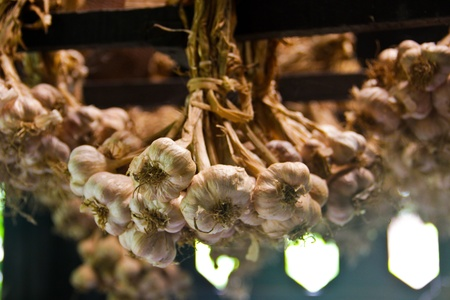 Groups of garlic hanging