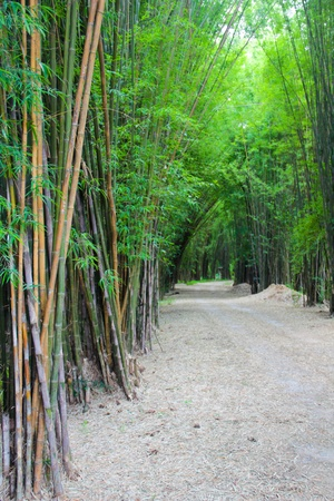 Greeny bamboo forest hall
