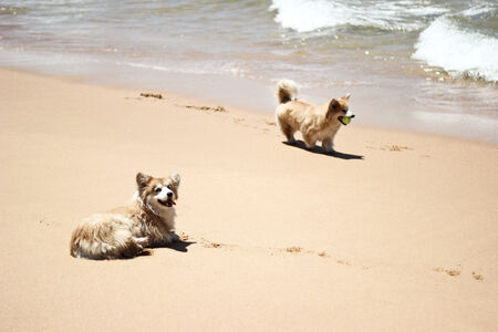 The dogs on the beach