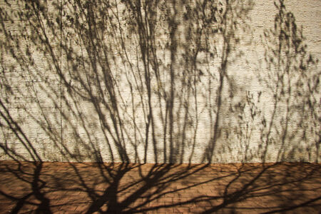 Tree shadow on the wall