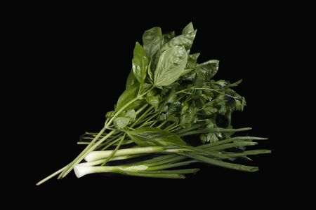 various greens on a black background Banco de Imagens - 128820146
