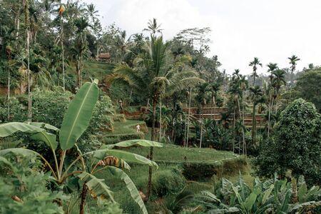 Green dense jungle on a hillside, mountains of Vietnam