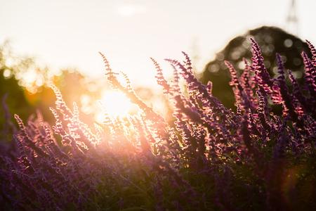 fall landscape: Sage sunset
