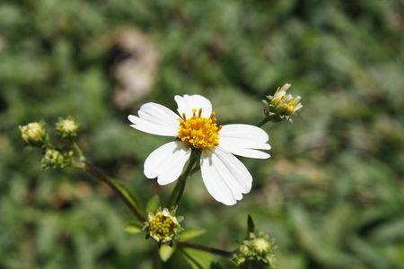 Simple flower Stock Photo