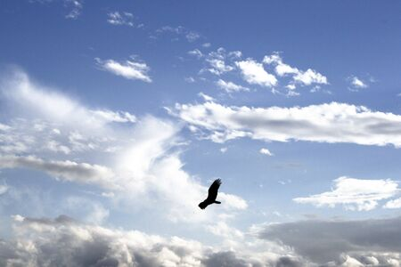 Black bird on the sky
