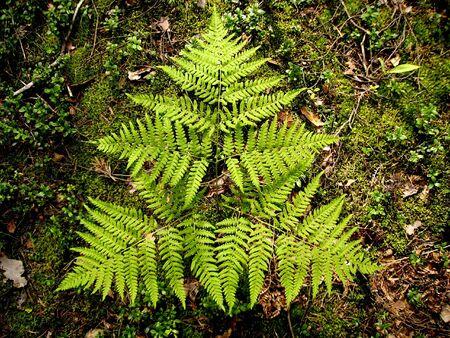 Fern leaf on darc background