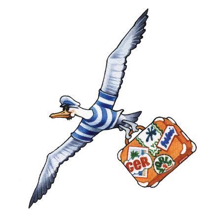 albatross: albatross
