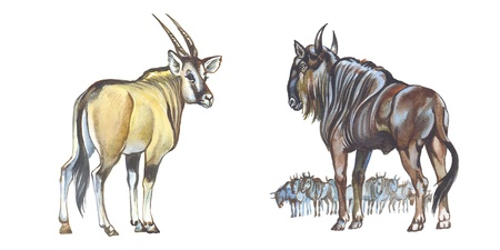 Wildebeest and Giant Eland (Lord Derby Eland)