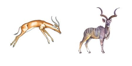 funny ox: Impala and Greater Kudu (african antelopes) Stock Photo
