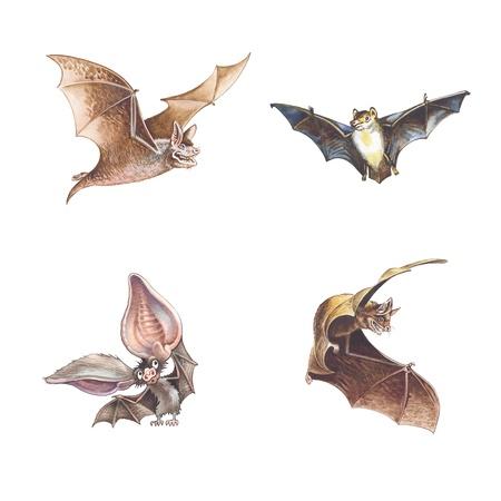 cartoon calendar: bat